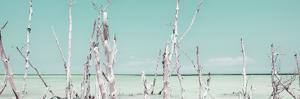 Cuba Fuerte Collection Panoramic - Ocean Wild Nature - Pastel Coral Green by Philippe Hugonnard