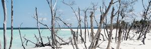 Cuba Fuerte Collection Panoramic - Tropical Wild Beach by Philippe Hugonnard