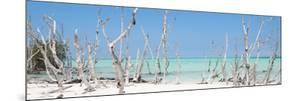 Cuba Fuerte Collection Panoramic - Wild Beach by Philippe Hugonnard