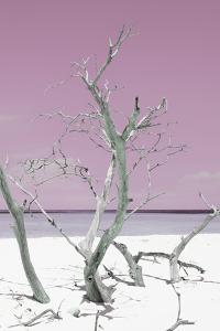 Cuba Fuerte Collection - Pink Stillness II by Philippe Hugonnard