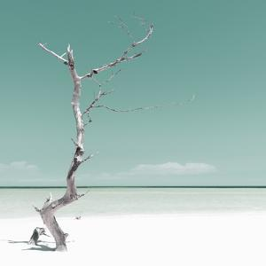 Cuba Fuerte Collection SQ - Alone on the White Sandy Beach - Pastel Green by Philippe Hugonnard
