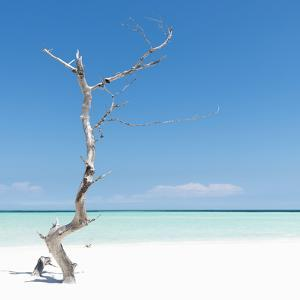 Cuba Fuerte Collection SQ - Alone on the White Sandy Beach by Philippe Hugonnard