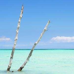 Cuba Fuerte Collection SQ - Aquatic Tree by Philippe Hugonnard