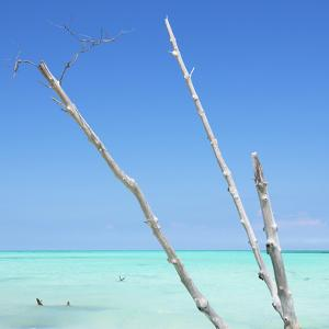 Cuba Fuerte Collection SQ - Aquatic Trees by Philippe Hugonnard