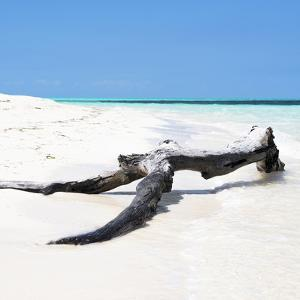 Cuba Fuerte Collection SQ - Black Tree on the Beach by Philippe Hugonnard