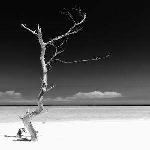 Cuba Fuerte Collection SQ BW - Alone on the White Sandy Beach by Philippe Hugonnard