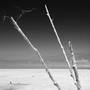 Cuba Fuerte Collection SQ BW - Aquatic Trees by Philippe Hugonnard