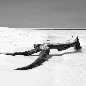 Cuba Fuerte Collection SQ BW - Black Tree on the Beach by Philippe Hugonnard