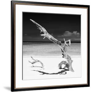 Cuba Fuerte Collection SQ BW - Solitary Tree by Philippe Hugonnard