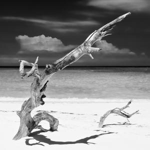 Cuba Fuerte Collection SQ BW - Trees Movement II by Philippe Hugonnard