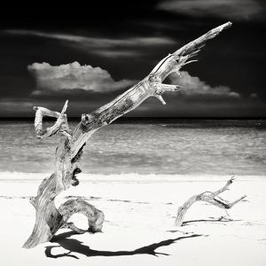 Cuba Fuerte Collection SQ BW - Trees Movement by Philippe Hugonnard
