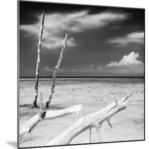 Cuba Fuerte Collection SQ BW - White Trees by Philippe Hugonnard