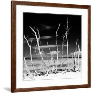 Cuba Fuerte Collection SQ BW - White water Tree Forest by Philippe Hugonnard