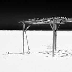 Cuba Fuerte Collection SQ BW - Wild Arbor by Philippe Hugonnard