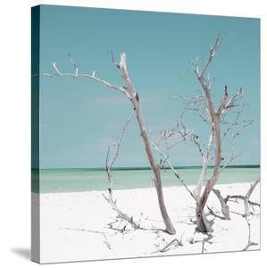 Cuba Fuerte Collection SQ - Coral Green Stillness by Philippe Hugonnard