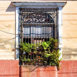 Cuba Fuerte Collection SQ - Cuban Window by Philippe Hugonnard