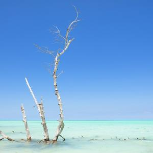 Cuba Fuerte Collection SQ - Ocean Nature by Philippe Hugonnard
