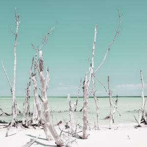 Cuba Fuerte Collection SQ - Ocean Wild Nature - Pastel Coral Green by Philippe Hugonnard
