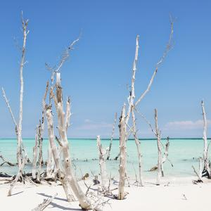 Cuba Fuerte Collection SQ - Ocean Wild Nature by Philippe Hugonnard