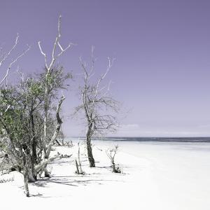 Cuba Fuerte Collection SQ - Sandy Beach Pastel Mauve by Philippe Hugonnard