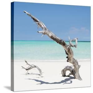 Cuba Fuerte Collection SQ - Solitary Tree by Philippe Hugonnard