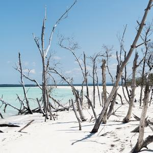 Cuba Fuerte Collection SQ - Tropical Wild Beach by Philippe Hugonnard