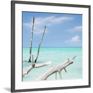Cuba Fuerte Collection SQ - White Trees II by Philippe Hugonnard