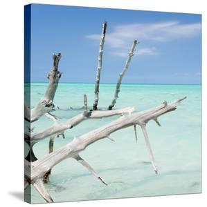 Cuba Fuerte Collection SQ - White Trees by Philippe Hugonnard