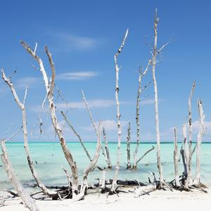Cuba Fuerte Collection SQ - White water Tree Forest by Philippe Hugonnard