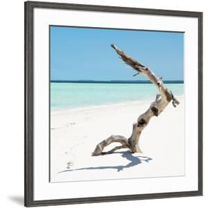 Cuba Fuerte Collection SQ - Wild Tree by Philippe Hugonnard