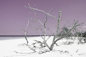 Cuba Fuerte Collection - Tropical Beach Nature - Pastel Purple by Philippe Hugonnard