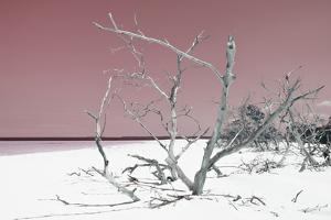 Cuba Fuerte Collection - Tropical Beach Nature - Pastel Red by Philippe Hugonnard