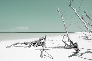 Cuba Fuerte Collection - Wild Green Lagoon by Philippe Hugonnard