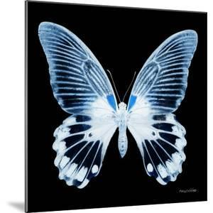 Miss Butterfly Agenor Sq - X-Ray Black Edition by Philippe Hugonnard