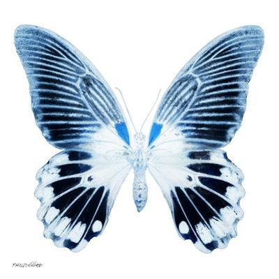 Miss Butterfly Agenor Sq - X-Ray White Edition by Philippe Hugonnard