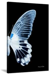 Miss Butterfly Agenor - X-Ray Right Black Edition by Philippe Hugonnard