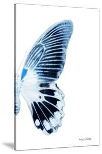 Miss Butterfly Agenor - X-Ray Right White Edition by Philippe Hugonnard