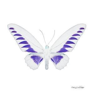 Miss Butterfly Brookiana Sq - X-Ray White Edition by Philippe Hugonnard