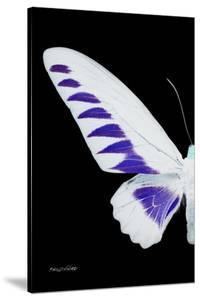 Miss Butterfly Brookiana - X-Ray Left Black Edition by Philippe Hugonnard