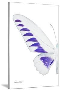 Miss Butterfly Brookiana - X-Ray Left White Edition by Philippe Hugonnard
