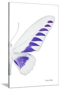 Miss Butterfly Brookiana - X-Ray Right White Edition by Philippe Hugonnard