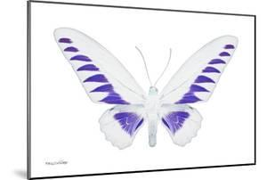 Miss Butterfly Brookiana - X-Ray White Edition by Philippe Hugonnard