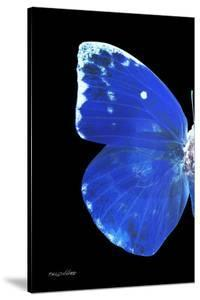 Miss Butterfly Catopsilia - X-Ray Left Black Edition by Philippe Hugonnard