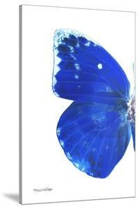 Miss Butterfly Catopsilia - X-Ray Left White Edition by Philippe Hugonnard