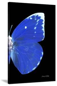 Miss Butterfly Catopsilia - X-Ray Right Black Edition by Philippe Hugonnard