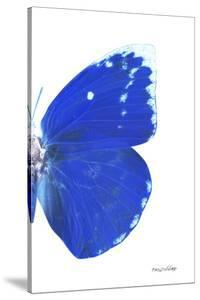 Miss Butterfly Catopsilia - X-Ray Right White Edition by Philippe Hugonnard