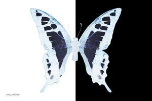Miss Butterfly Cloanthus - X-Ray B&W Edition by Philippe Hugonnard