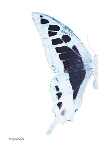 Miss Butterfly Cloanthus - X-Ray Left White Edition by Philippe Hugonnard