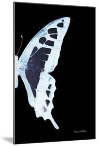 Miss Butterfly Cloanthus - X-Ray Right Black Edition by Philippe Hugonnard