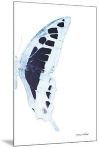 Miss Butterfly Cloanthus - X-Ray Right White Edition by Philippe Hugonnard